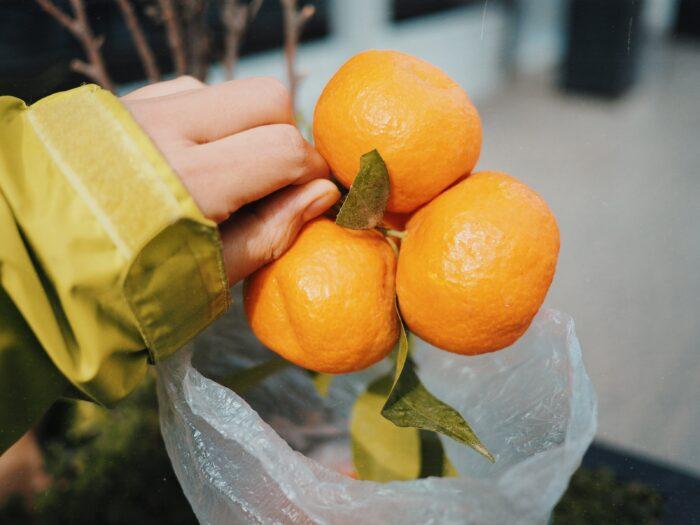 モロッコのオレンジ